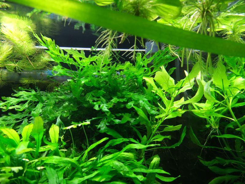 60l aquarium seite 4 aquarien vorstellung forum. Black Bedroom Furniture Sets. Home Design Ideas
